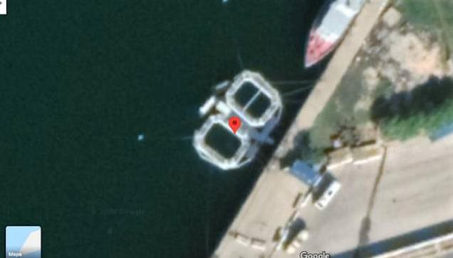 La Armada rusa utiliza delfines para vigilar su base naval en Siria